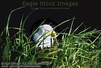 Bald Eagle Photos - Folder 3