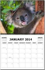 2014 Monthly Wall Calendar - Koala Bears