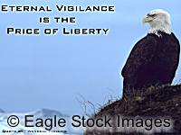 Eternal Vigilance - American Eagle picture looking out over bay. Picture of Bald Eagle from our new patriotic screen saver.