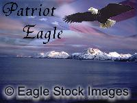 Patriotic Bald Eagle Picture - patriot eagle