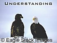 Understanding - White and Black American Bald Eagle - Nature's own diversity. From Patriot Eagle Screen Saver