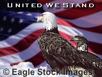 United We Stand - screen saver picture with bald eagle and USA flag.  One of my favorite eagle pictures!  Patriotic picture with flag and american eagle.